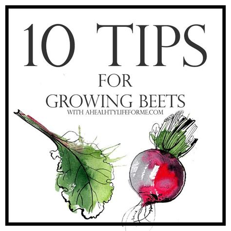 10 Tips For Living Longer by 10 Tips For Growing Beets A Healthy For Me