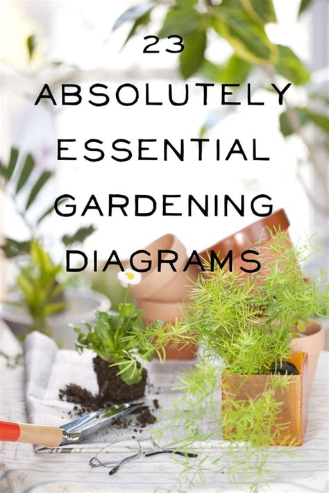herb garden basics how much light does your houseplant need find out on this