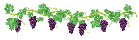 Of The Vine by The Vine Clipart Clipground