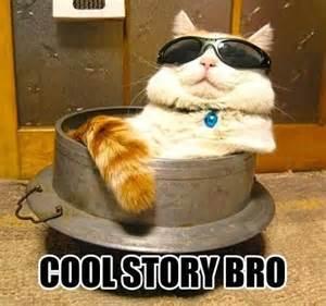 Cool Cat Meme - cats cat memes and memes on pinterest
