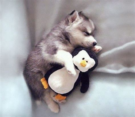 most adorable animals these 32 adorable animals will make your heart explode