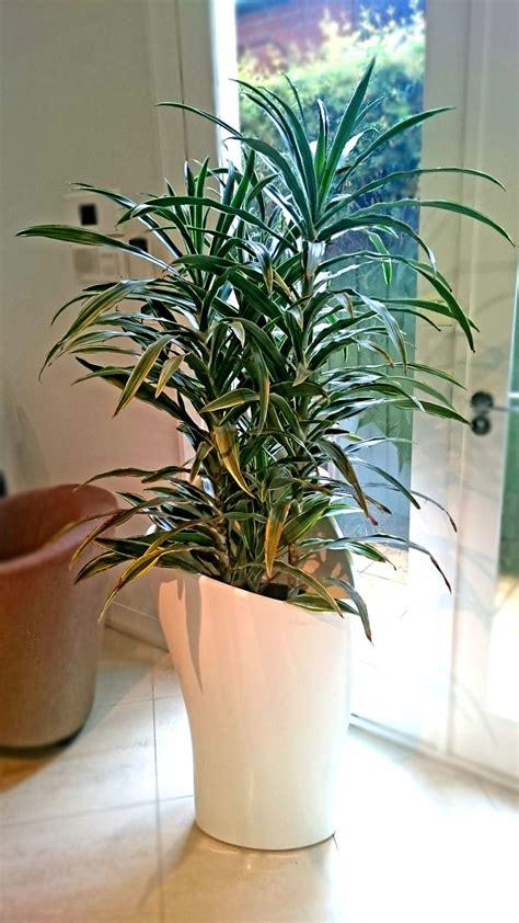 Plants Broadway Plantscapers | plants broadway plantscapers