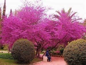 plantes fleurs le paradis des jardins botaniques