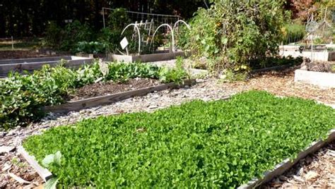 Winter Cover Crops Mnn Mother Nature Network Best Cover Crop For Vegetable Garden
