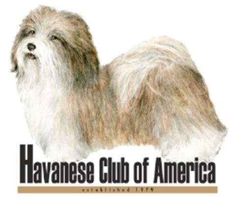 havaneses puppies for sale havanese puppies havanese breeders havaneses for sale havaneses breeds picture