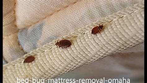 kill bed bugs in sofa kill bed bugs in sofa baci living room