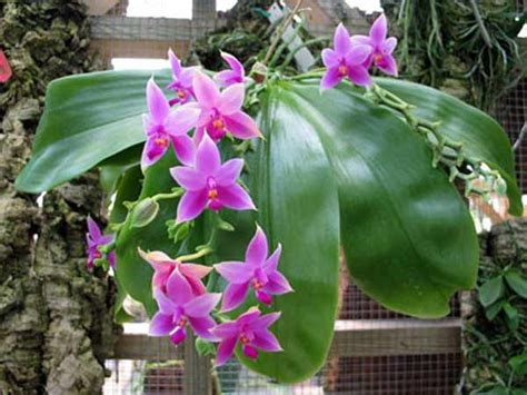 kumpulan gambar bunga anggrek  namanya alamendahs blog