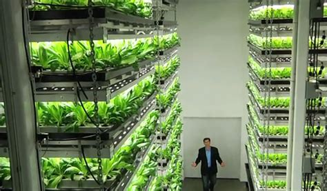 Vertical farming ? viable agriculture or urban pipedream