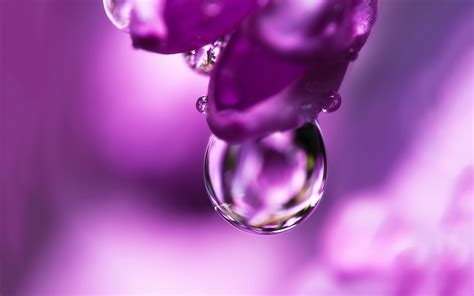 Cincin Water Drop Flower pink flower water drop hd desktop wallpapers 4k hd