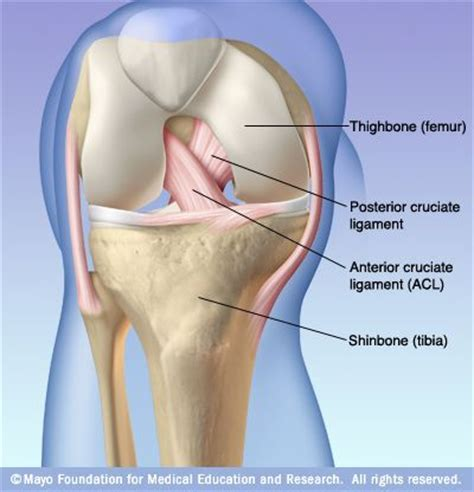 cruciate ligament tear pcl injury posterior cruciate ligament injury happens far less often than does