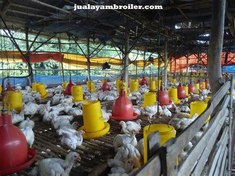 Jual Bibit Ayam Broiler Di Bogor jual ayam broiler di bogor jual ayam broiler