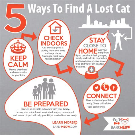 finding a lost how to find a missing cat cats