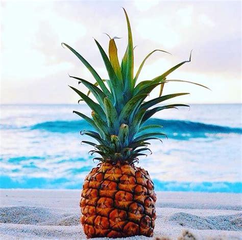 pineapple   beach  sitting  wedding