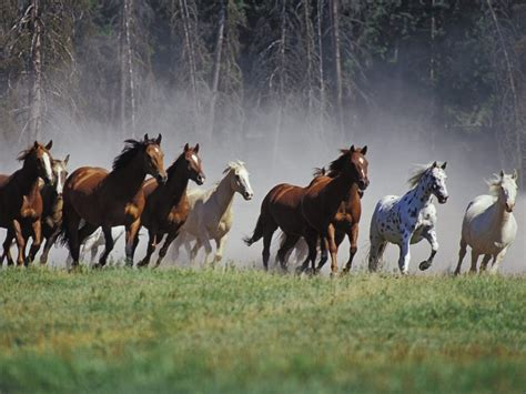 wallpaper horse free download horse wallpapers hd pictures free download hd walls