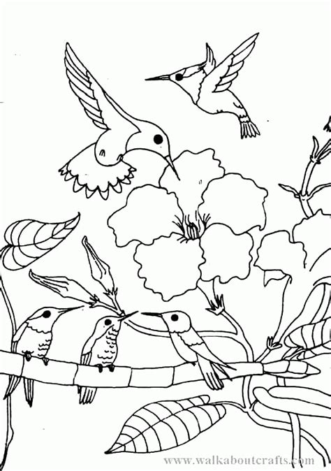 Hummingbird Coloring Page by Humming Bird Coloring Page Coloring Home