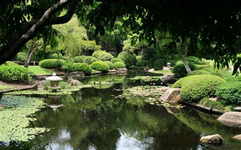 Mount Coot Tha Botanic Gardens Best Places For Meditation In Brisbane Kundalini Brisbane Authentic Awakening And