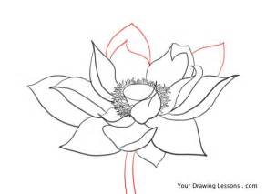 Lotus Flower Drawing Step By Step How To Draw A Lotus Flower Your Drawing Lessons