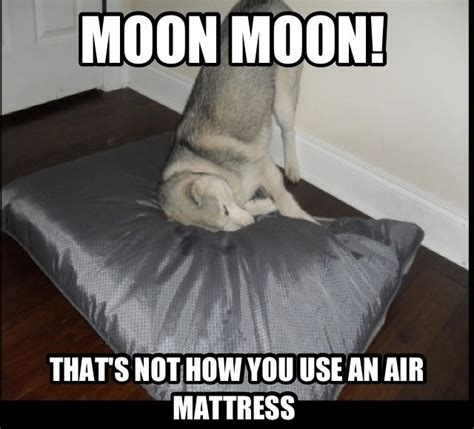 Moon Moon Meme - i love moon moon memes the saga of moon moon pinterest