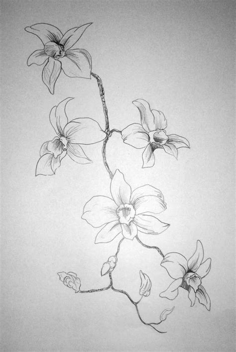 Sketches Flowers by Flowers Drawings In Pencil Free Large Images
