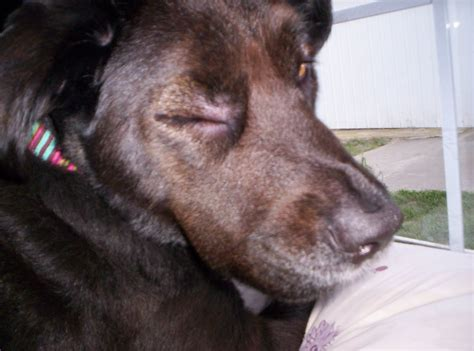 are dogs allergic to grapes dogs allergic to tomatoes breeds picture
