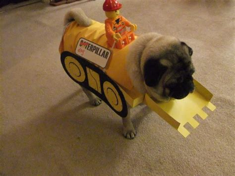 dressed up pug dress up your pug for construction themed cost