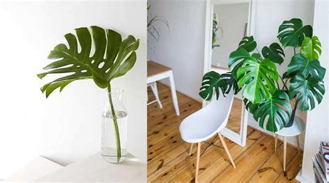 piante da arredo interno piante interni ecco quali scegliere se non avete il