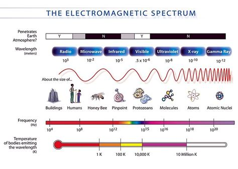 Electromagnetic Spectrum Visible Light by Biobook Leaf What Is Light