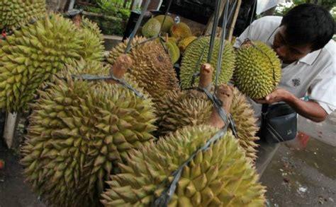 wow ternyata hutan durian terbesar  dunia