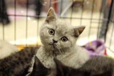 lunesse s 233 quence mignons entre chiots et chatons