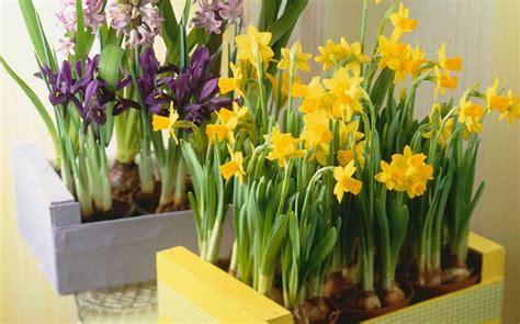 fiori con bulbo fiori di primavera
