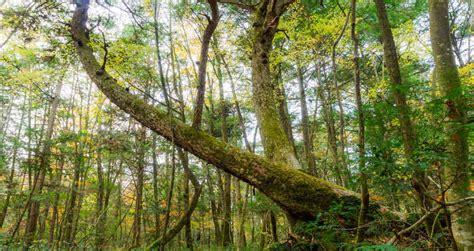 el bosque de los 0060762195 bosque de los suicidios de jap 243 n