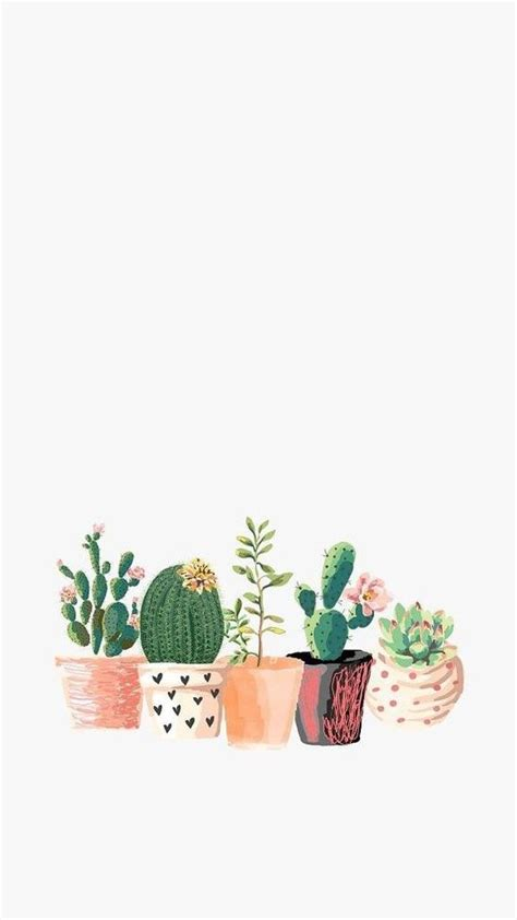 wallpaper for iphone cactus cactus wallpaper tumblr www pixshark com images