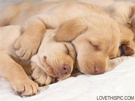 cuddling puppies cuddling puppies pictures photos and images for and