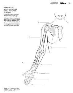 kaplan anatomy coloring book pdf kaplan anatomy coloring book pdf boudli