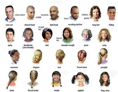 list of hairstyles and their names hair and the different types learning english