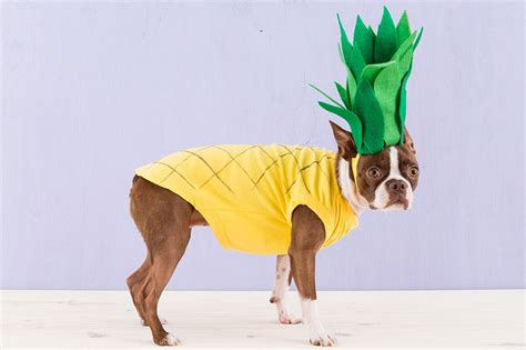is pineapple for dogs 50 adorable costumes vittles vault