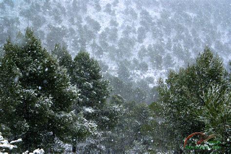 imagenes de nieve cayendo image gallery nieve cayendo