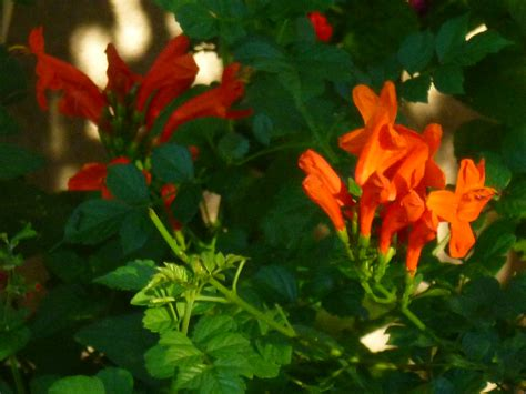 Orange Garden Flowers Exploring Enrolauto Images Femalecelebrity