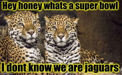 Jaguars Memes - whats a super bowl imgflip