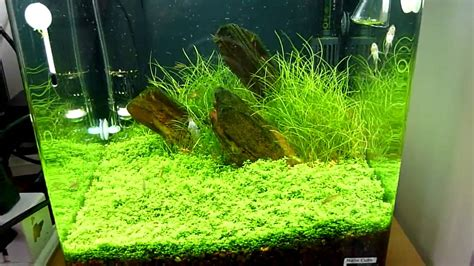 Penyubur Aquascape Co2 By Nd Pets nano planted tank with celestial pearl danio galaxy