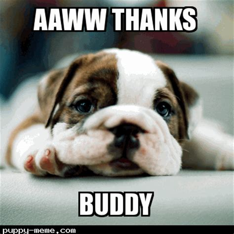 Cute Puppy Meme - buddy thanks