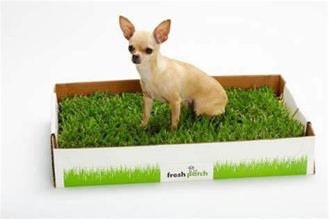 real grass potty real grass potty for apartments search results million gallery