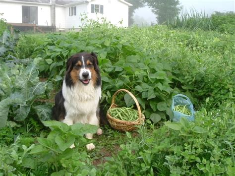 how can you leave a puppy in a crate 7 ways to proof your garden