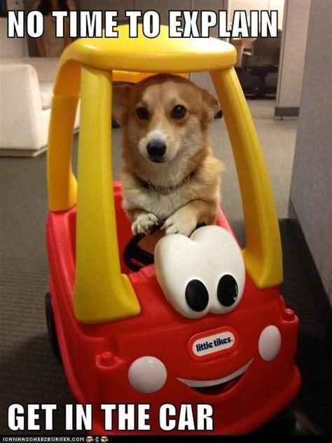 Puppie Memes - funny puppy memes kenzie the fuzzbucket
