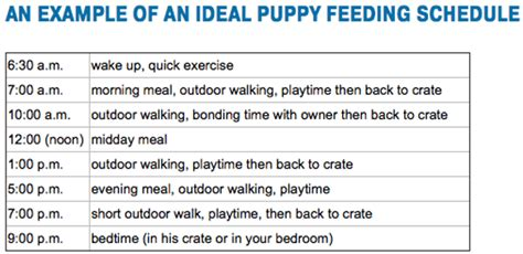 feeding schedule for puppies top 8 best puppy feeding guides what to feed a puppy how much schedule