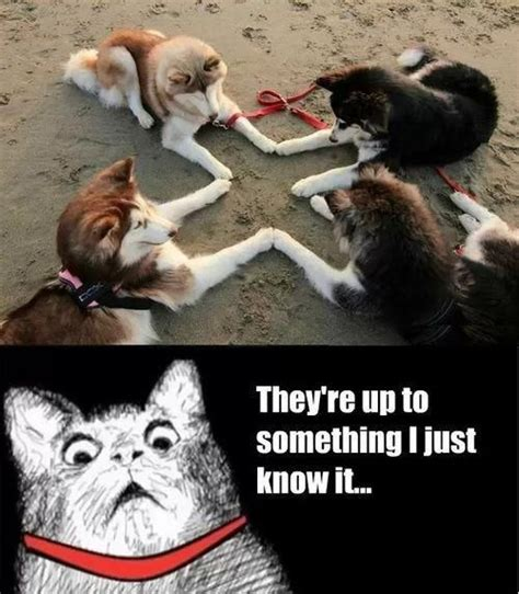 Dog And Cat Memes - animals cats dogs meme animals pinterest dog memes