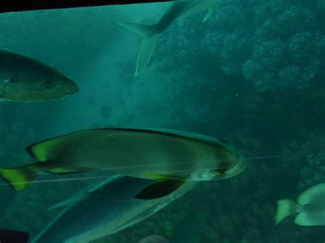 cairns glass bottom boat reef tours green island and the great barrier reef cairns