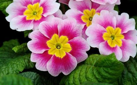 imagenes flores invierno cu 225 les son las flores de invierno espaciociencia com