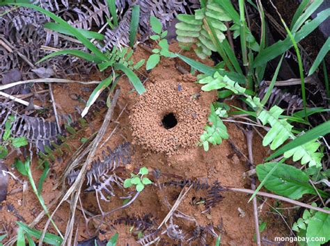 Cat Repellent Carpet by How To Get Rid Of Ant Hills Top 10 Best Ways To Destroy
