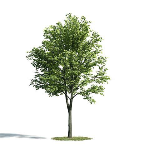 tree pictures tree 5 am171 archmodels max c4d obj fbx 3d model evermotion